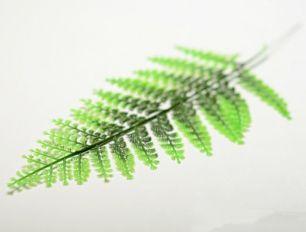 Лист петрушки зеленый комбинированный